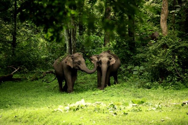 elefanti kerala