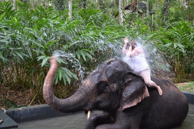 Poză tâmpă clasică din India, în momentul în care elefantul te pocneşte cu apă frontal.